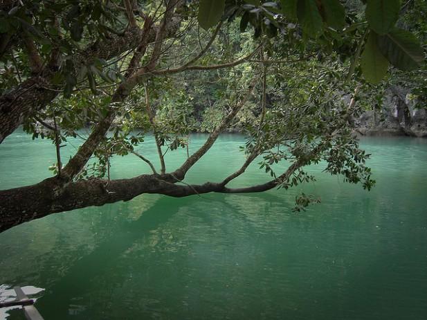 Foto na floresta Undergound River.