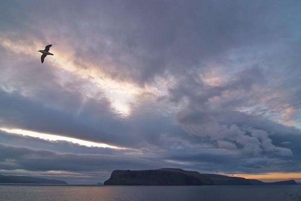 Foto das Ilhas Faroé com gaivota ao anoitecer.