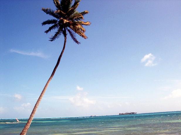 Foto de palmeira e mar em San Andrés.