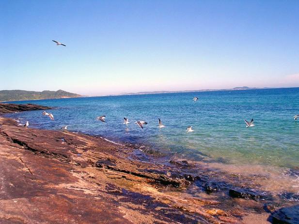 Foto de mar e gaivotas em Búzios, Brasil.