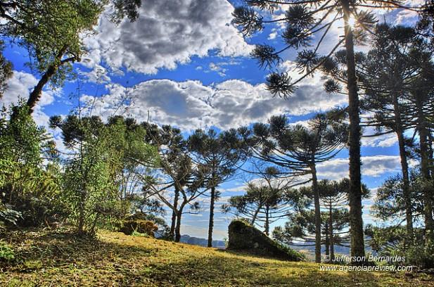 Foto de árvores e natureza em Canela, Brasil.