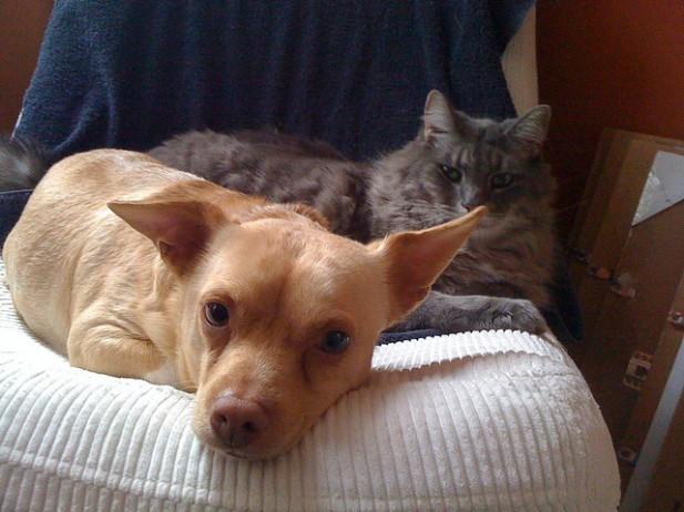 Foto de cão e gato lado a lado.