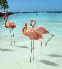 Foto de flamingos, água azul cristalina, pessoas e mar ao fundo.