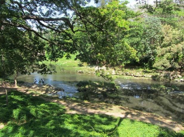 Foto de riacho e árvores em Havana.