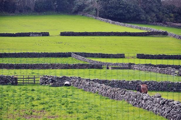 Foto de paisagem da Ilha Terceira com relva muros e animais.