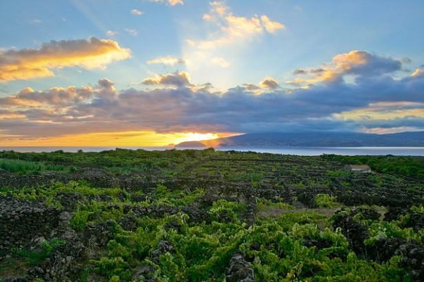 Foto de vinha com o pôr-do-sol na Ilha do Pico, Açores.