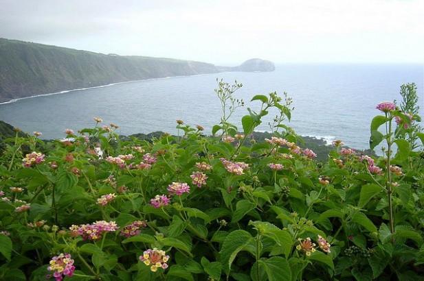 Foto de flores e mar.