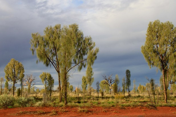Foto de ávores e terra vermelha.