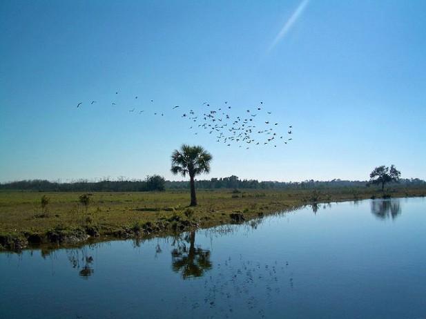 Foto de água, vegetação e aves.