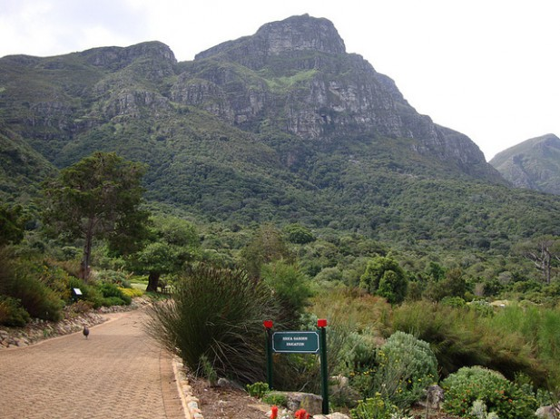 Kirstenbosch National Botanical Garden, Western Cape