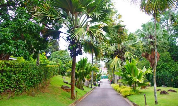 seychelles-national-botanical-garden