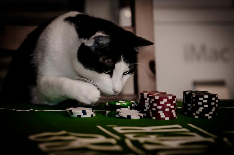 Gatinho a jogar no casino
